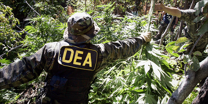 post-image-DEA Just Admitted Weed Has Never Killed Anyone