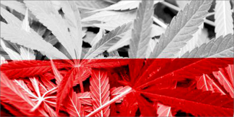 post-image-Poland Is The Latest European Country To Legalize Medical Cannabis