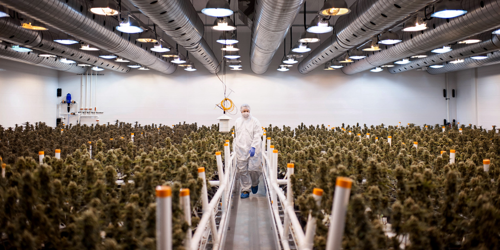 post-image-Big Pharma made a fortune generating a crisis. Legal marijuana is about to disrupt it.