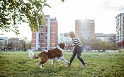 post-image-Dog Parks: Are They Worth the High?