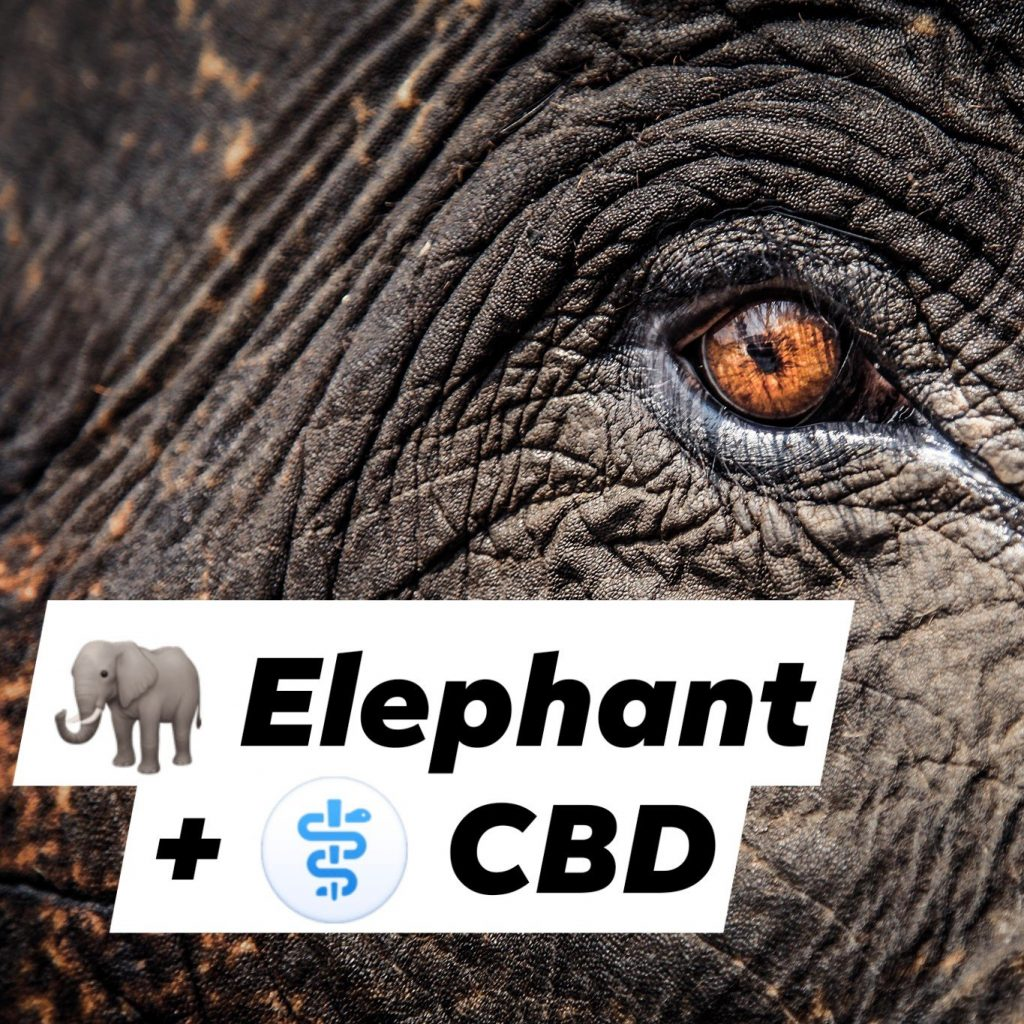 post-image-🐘 Depressed elephant at Warsaw Zoo to receive experimental cannabis oil treatment